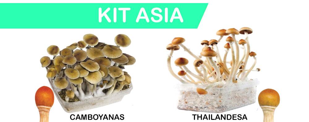 Kit de setas, variedades y como cultivarlas