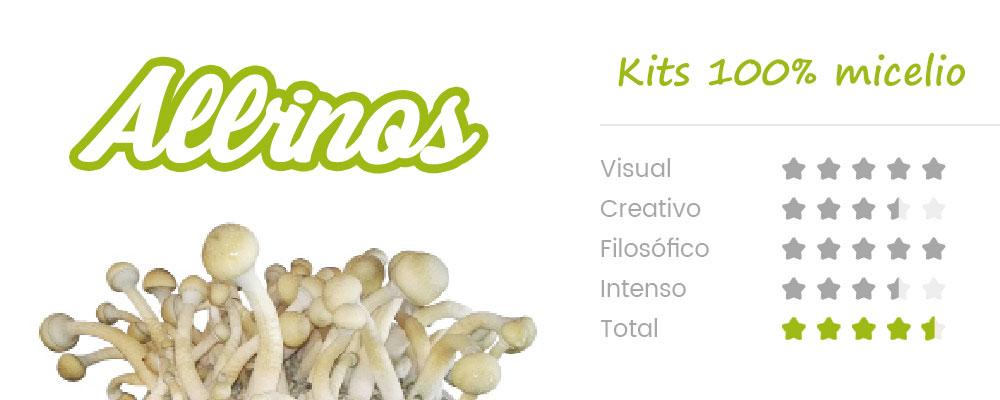 La Psilocybe cubensis Albino A+ es también conocida como AA+, pero el nombre es engañoso porque en realidad no es un albino, sino una mutación de la cepa con poca pigmentación. El hábitat natural de esta singular seta es un clima subtropical y se desarrolla mejor en estiércol bovino o equinos y suelos enriquecidos. CARACTERISTICAS SETAS ALBINAS: Tiene unos frutos de tamaño mediano, grande. Los sombrerillos son de un pálido color crema y con toques blancos, de ahi su nombre Albino ,pero en realidad es una variante de una cepa con una pigmentación reducida, particularidad que se denomina leucismo. El tallo del fruto es del mismo color que el sombrerillo y muestra un intenso color azul al magullarse o golpearse. A diferencia de la PF albino, esta mutación mantiene unas esporas con pigmentación normal de un color púrpura oscuro. OBSERVACIONES: Recomendamos que para que esta variedad sea lo más blanca posible,coloques el kit en un lugar oscuro, alejado de la luz directa del sol. De gran potencia son muy preciadas entre los cultivadores y no suelen estar siempre en stock.