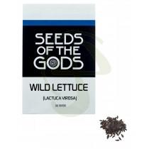 Semillas Wild Lettuce o lechuga silvestre