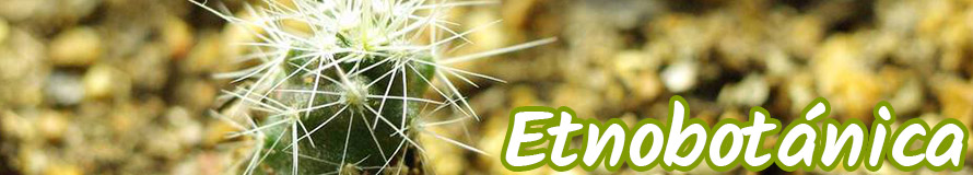 etnobotanica online